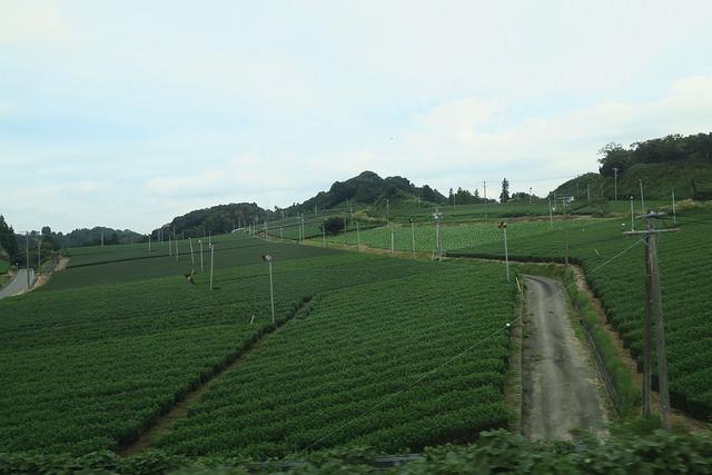 Tea Farm in Shizuoka Prefecture