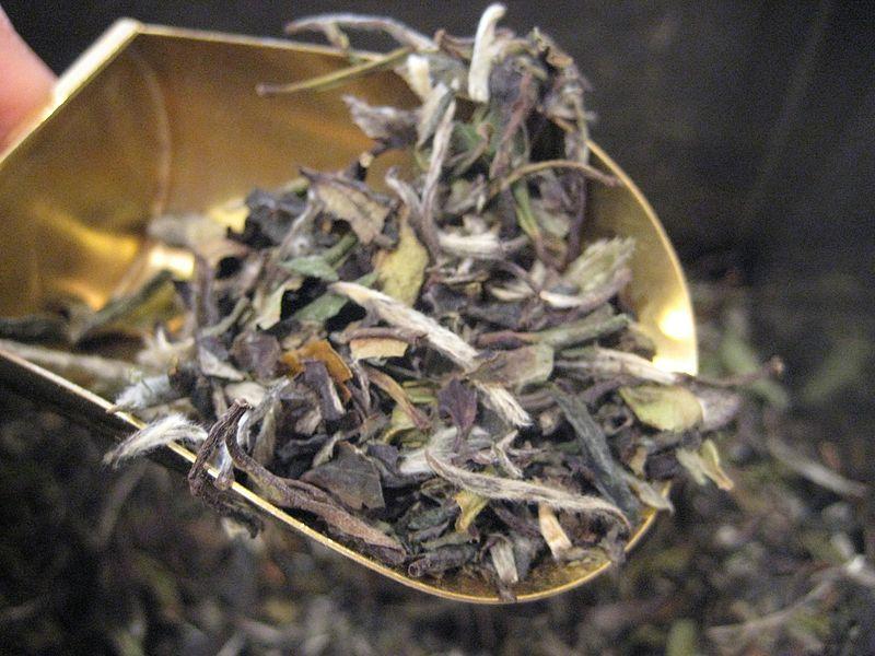 downy leaves of white peony tea resting in a golden shovel