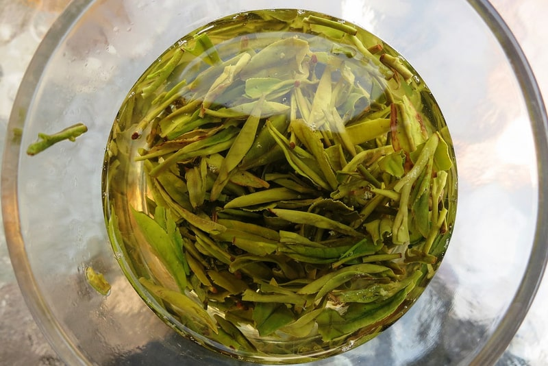 Longjing tea leaves floating in the bottom of a glass filled with water